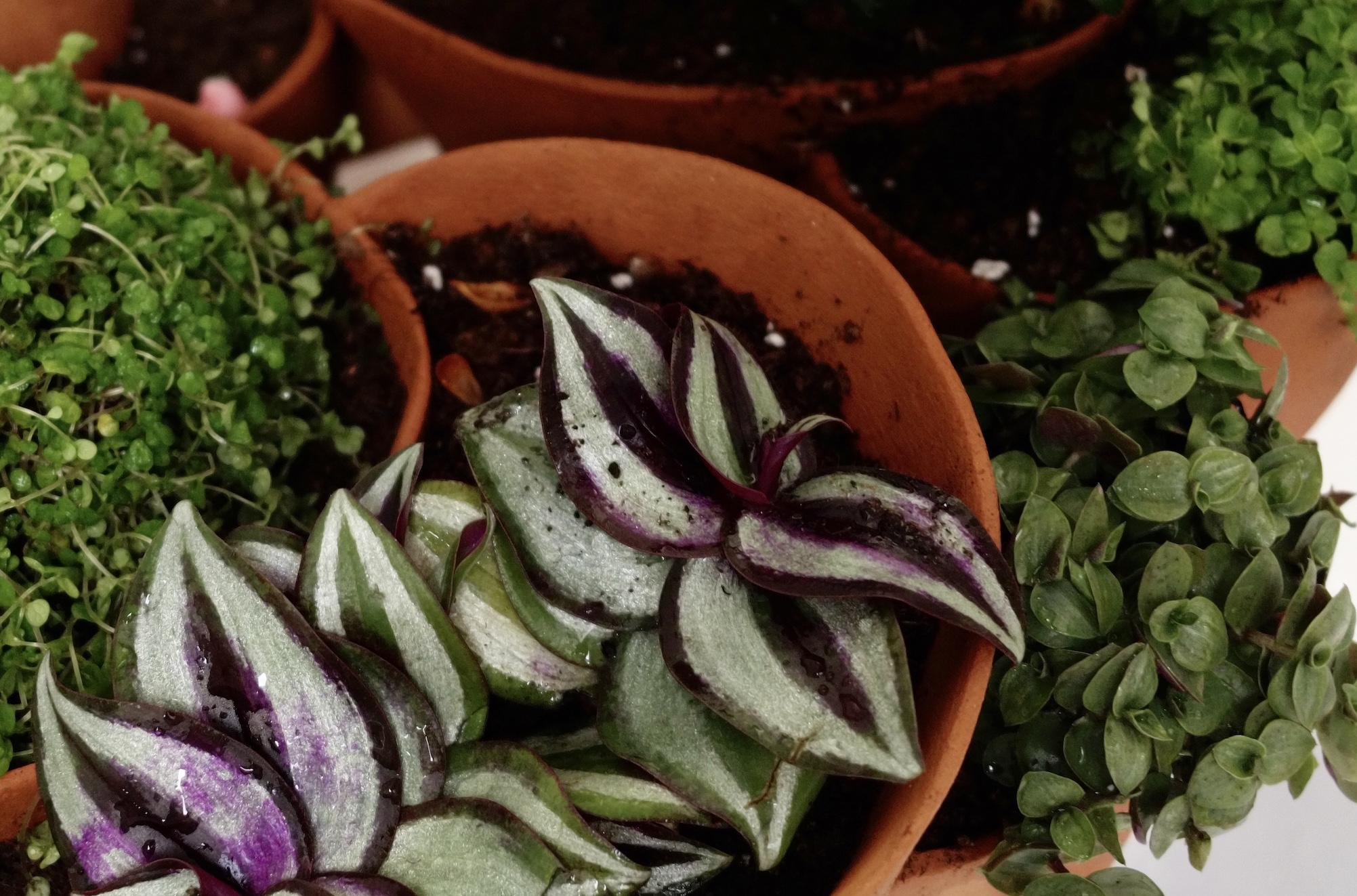 Céramiques végétales